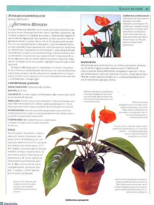 комнатные растения (64) (524x700, 218Kb)