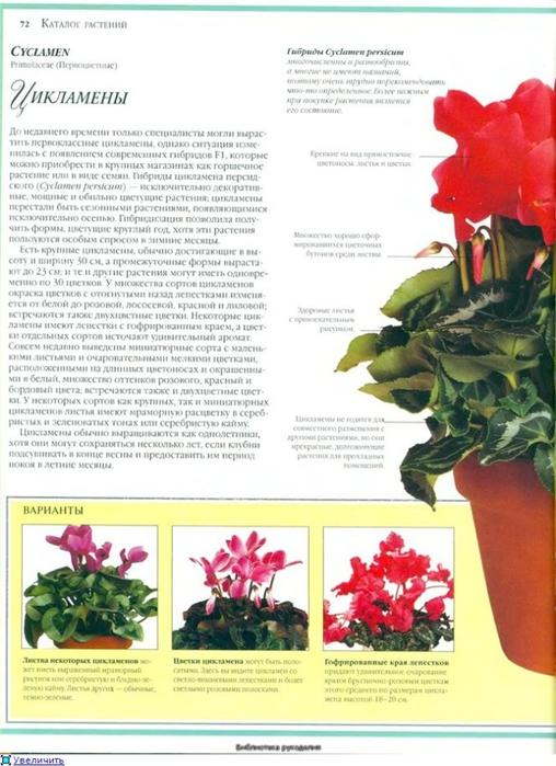 комнатные растения (65) (508x700, 239Kb)