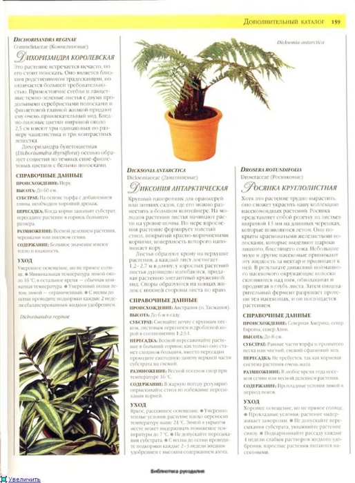 комнатные растения (67) (514x700, 238Kb)