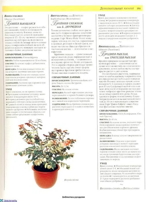 комнатные растения (68) (509x700, 214Kb)