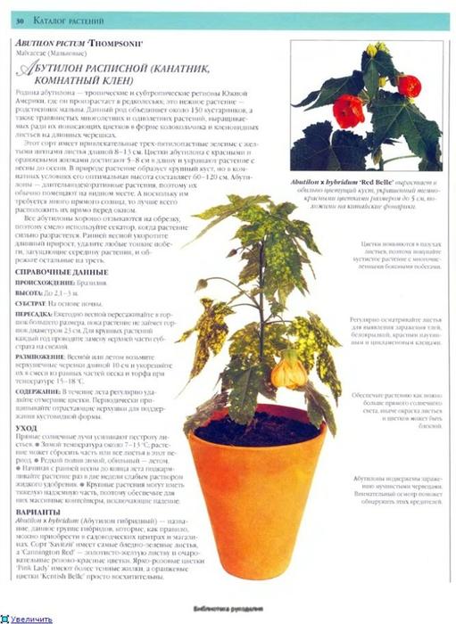 комнатные растения (71) (511x700, 225Kb)