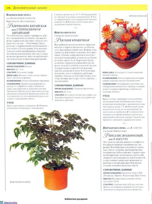 комнатные растения (73) (521x700, 237Kb)