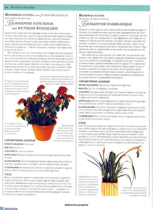 комнатные растения (77) (511x700, 240Kb)