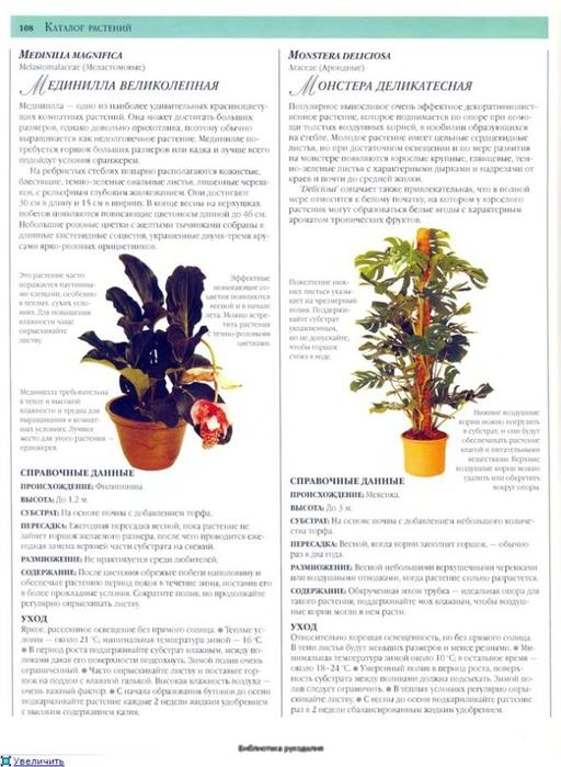 комнатные растения (82) (512x700, 226Kb)