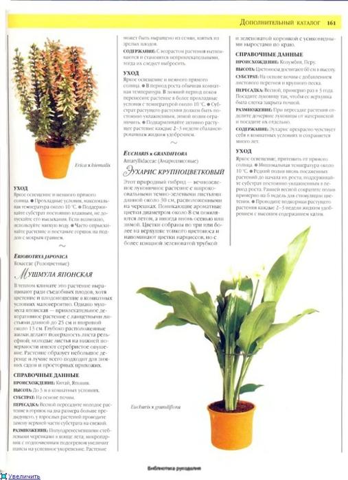 комнатные растения (86) (507x700, 195Kb)