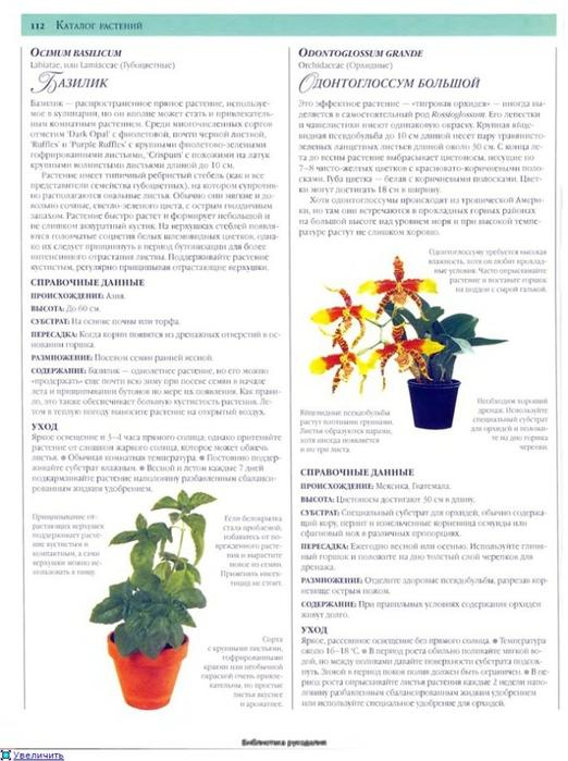 комнатные растения (88) (522x700, 224Kb)