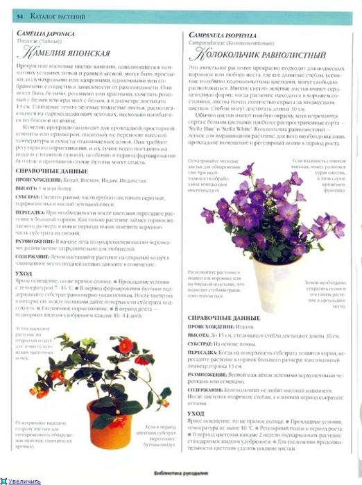 комнатные растения (94) (522x700, 225Kb)