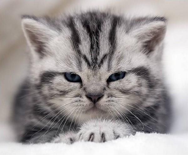 cats10 (600x494, 63Kb)