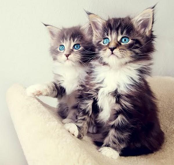 cats12 (600x568, 74Kb)