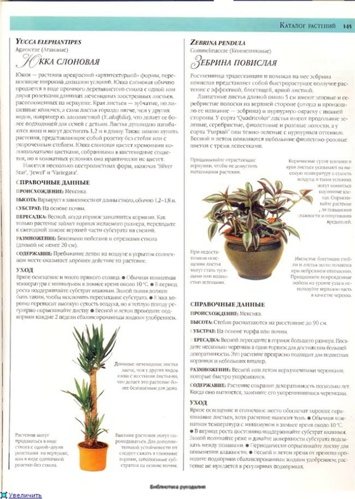 комнатные растения (98) (497x700, 226Kb)