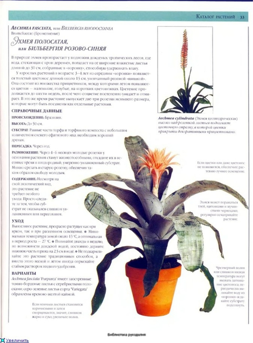 комнатные растения (100) (516x700, 216Kb)
