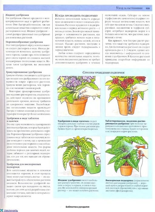комнатные растения (102) (511x700, 266Kb)