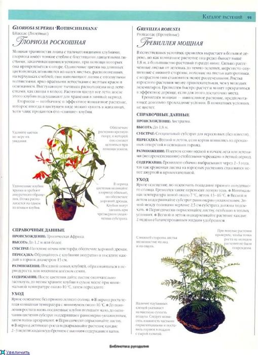 комнатные растения (106) (509x700, 230Kb)
