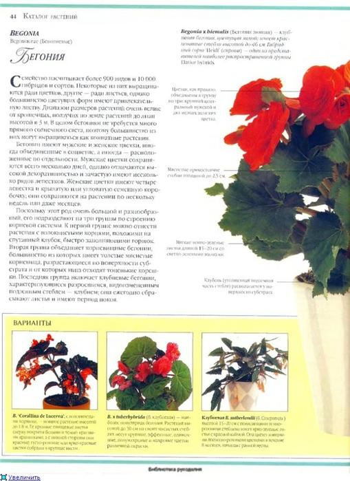 комнатные растения (108) (509x700, 237Kb)
