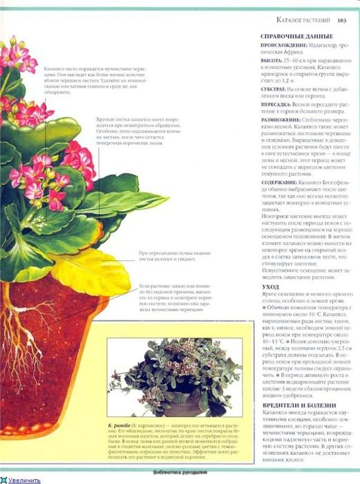 комнатные растения (110) (521x700, 228Kb)