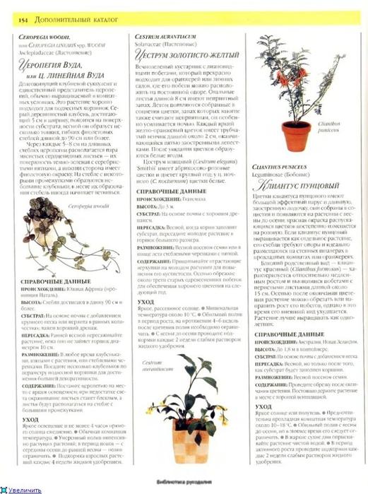комнатные растения (115) (521x700, 236Kb)