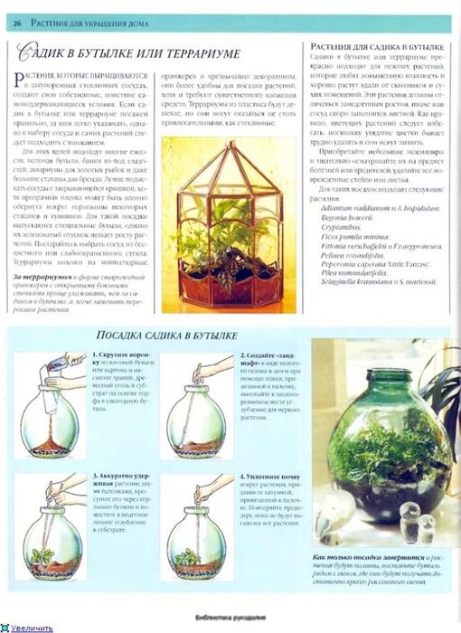 комнатные растения (117) (510x700, 250Kb)