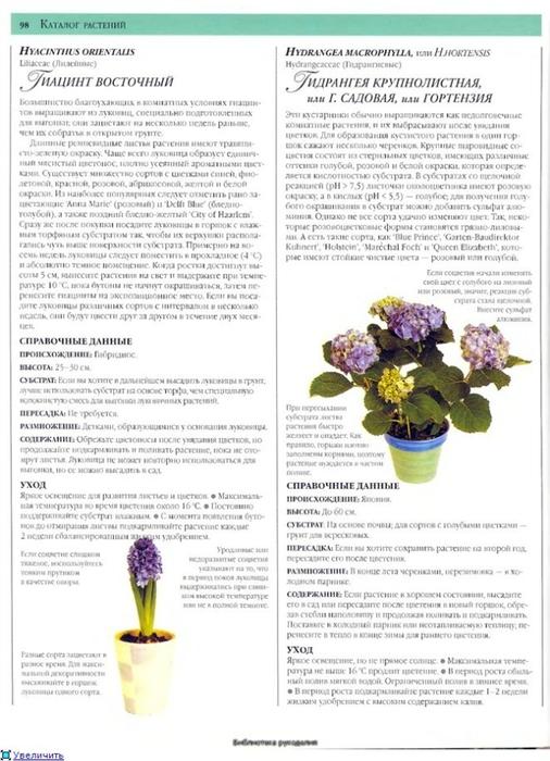 комнатные растения (120) (506x700, 225Kb)