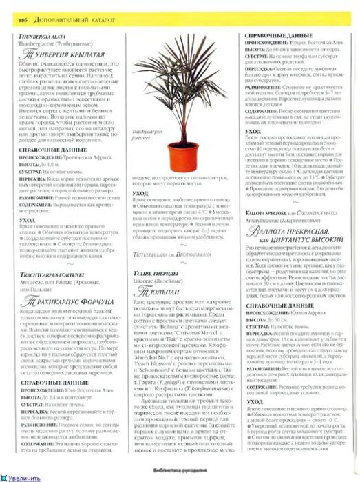 комнатные растения (122) (523x700, 235Kb)