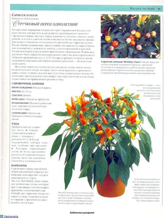 комнатные растения (124) (526x700, 256Kb)