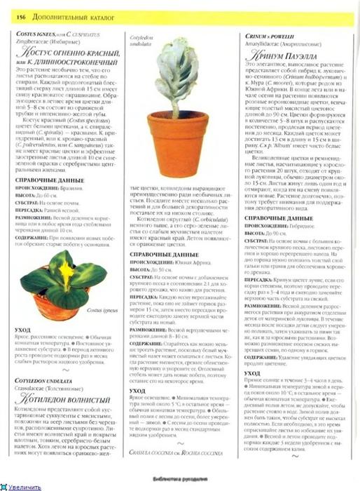 комнатные растения (126) (514x700, 223Kb)