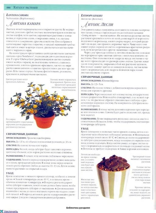 комнатные растения (128) (513x700, 240Kb)