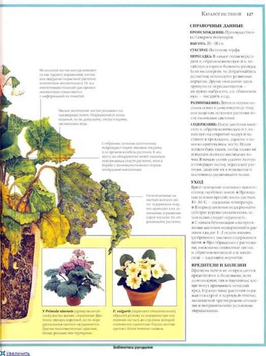 комнатные растения (133) (523x700, 229Kb)