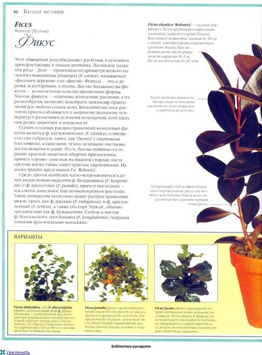 комнатные растения (135) (516x700, 242Kb)
