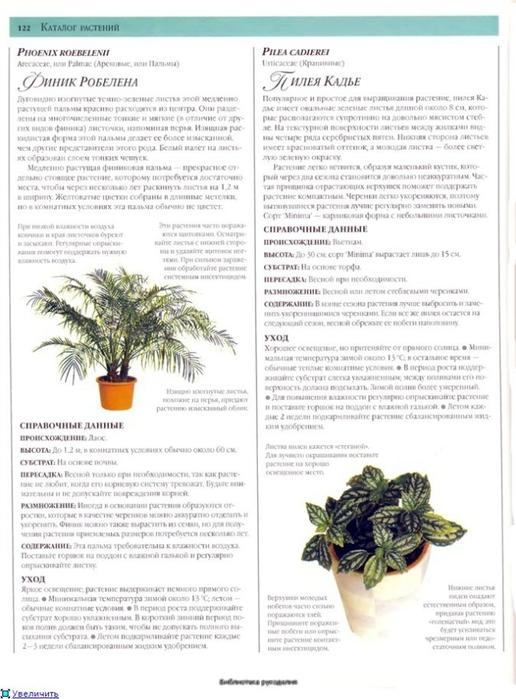 комнатные растения (137) (516x700, 222Kb)