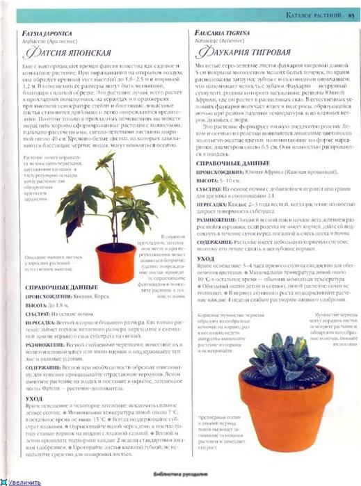 комнатные растения (139) (519x700, 238Kb)