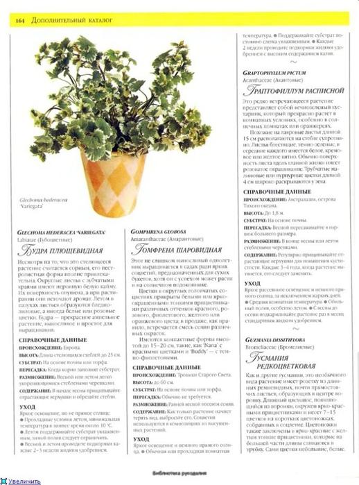 комнатные растения (141) (518x700, 221Kb)