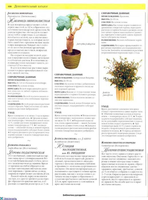 комнатные растения (145) (518x700, 226Kb)