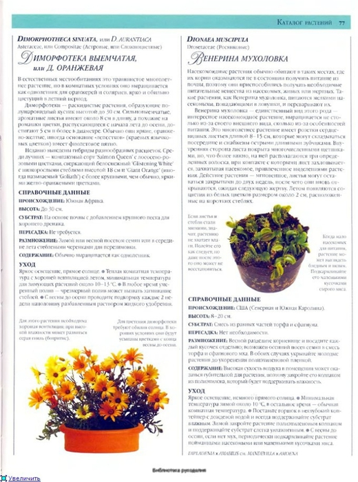 комнатные растения (149) (520x700, 255Kb)