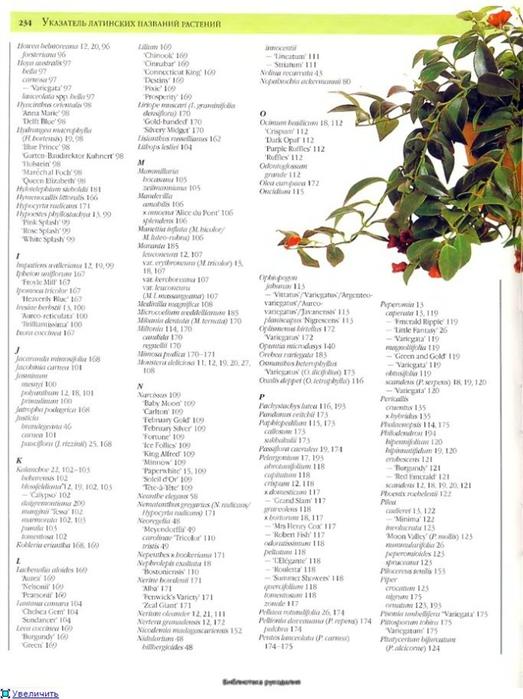 комнатные растения (151) (523x700, 200Kb)