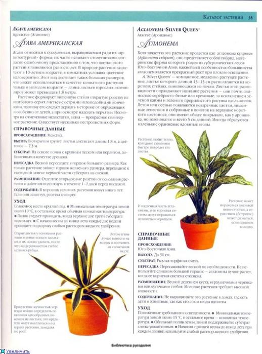 комнатные растения (153) (518x700, 247Kb)