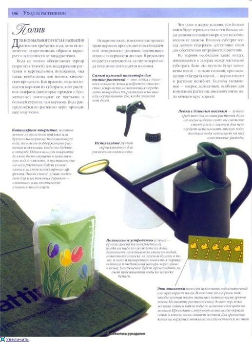 комнатные растения (157) (517x700, 224Kb)