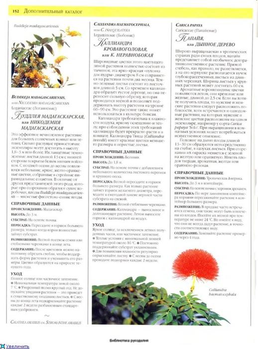 комнатные растения (159) (518x700, 236Kb)