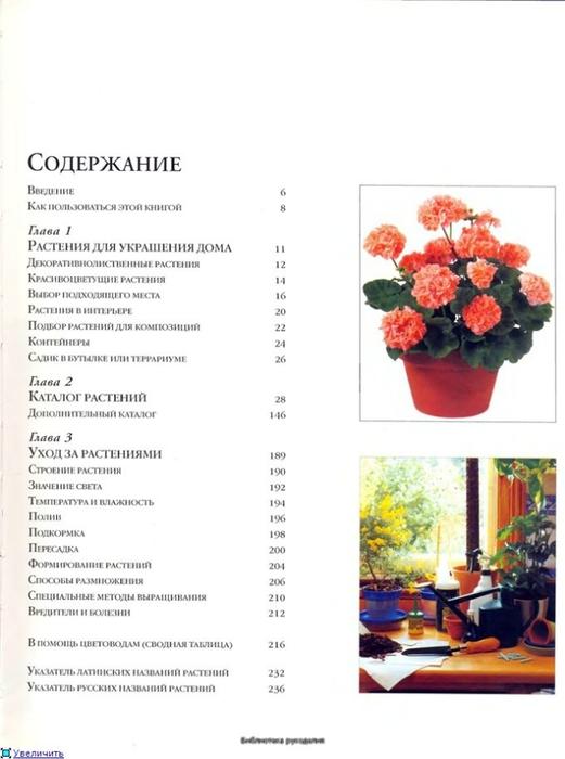 комнатные растения (163) (521x700, 144Kb)