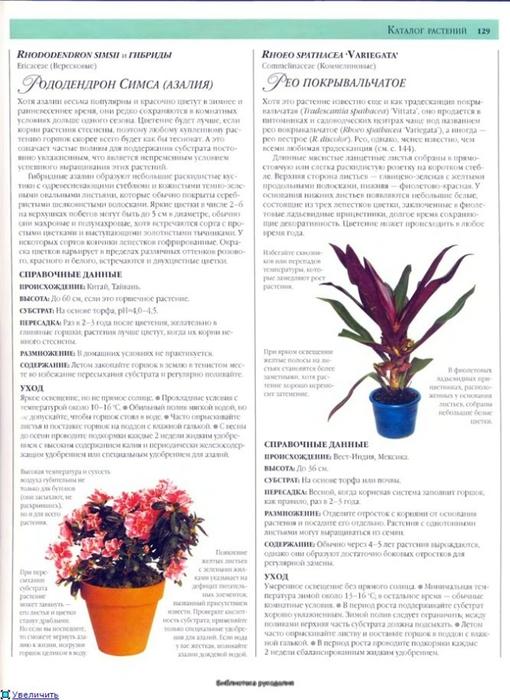 комнатные растения (165) (510x700, 233Kb)