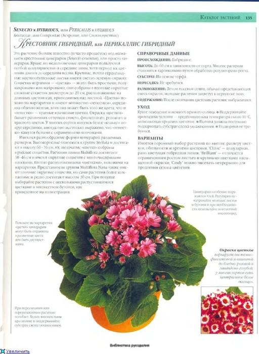 комнатные растения (167) (512x700, 229Kb)