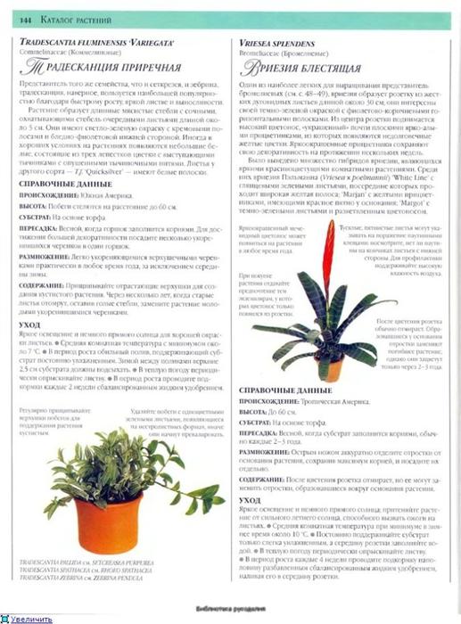 комнатные растения (172) (517x700, 227Kb)