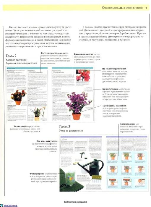 комнатные растения (176) (511x700, 182Kb)