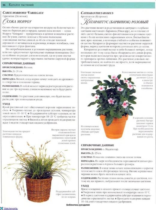 комнатные растения (180) (520x700, 243Kb)