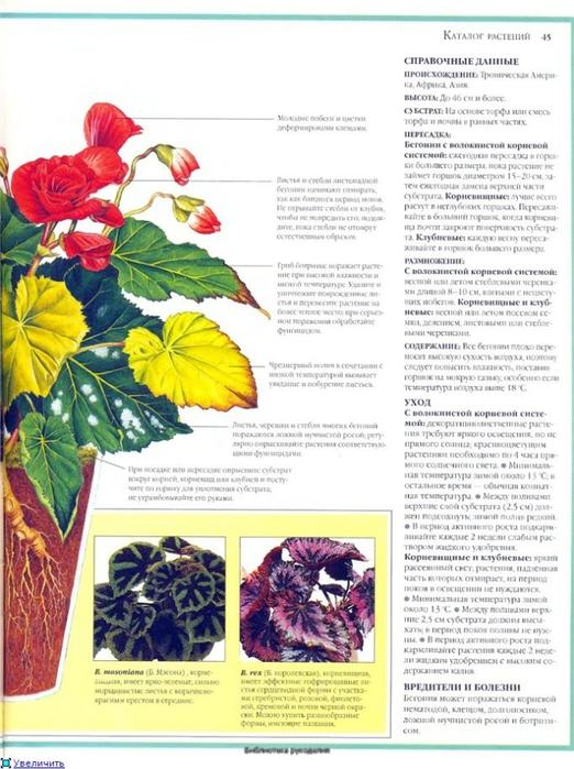 комнатные растения (182) (522x700, 262Kb)