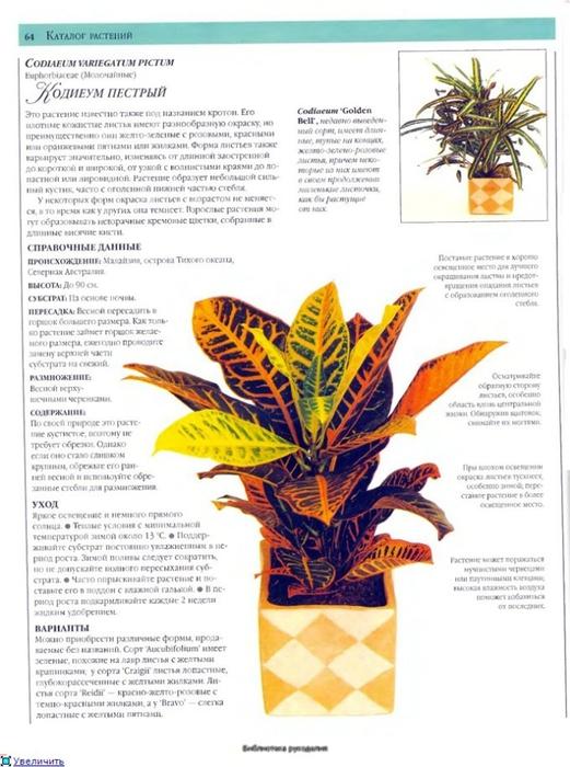 комнатные растения (186) (521x700, 234Kb)