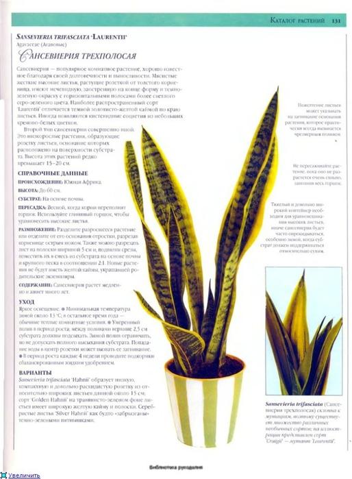 комнатные растения (192) (514x700, 213Kb)