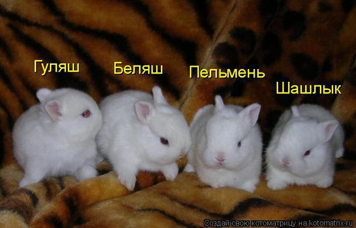 как назвать кролика мальчика список