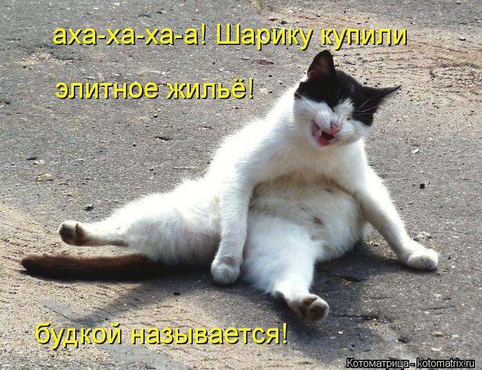 kotomatritsa_Oj (700x536, 95Kb)