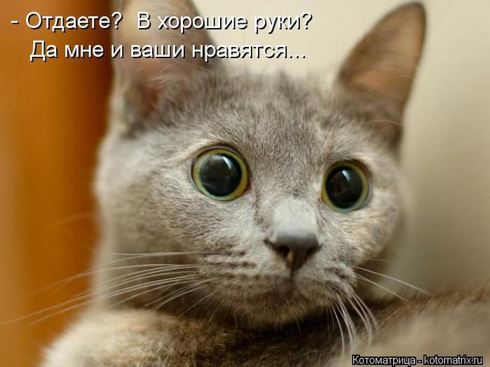 kotomatritsa_E (700x524, 46Kb)