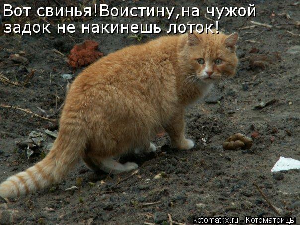 kotomatritsa_e_ (604x453, 67Kb)